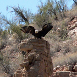 Eagle Verde Canyon - Sedona Tourism