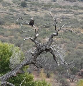 Eagle nest photo