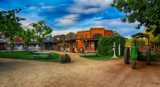 Blazin' M Ranch cottonwood